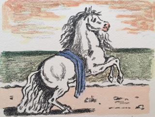 cavallino2
